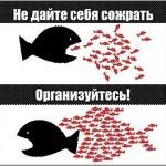 organizuysya