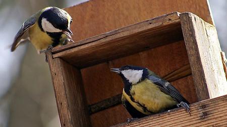 Створи справжній дім для птахів!